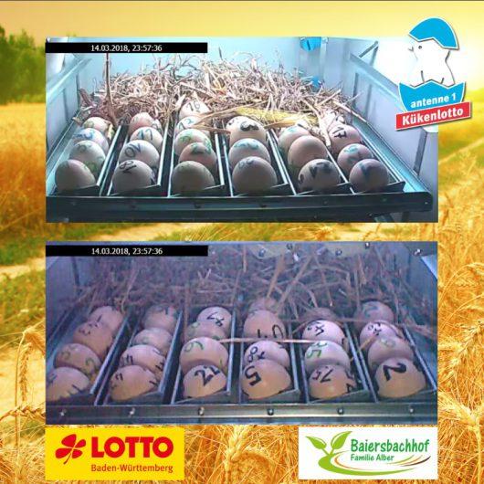 antenne 1 - Kükenlotto (Bild: ©antenne1-Homepage)