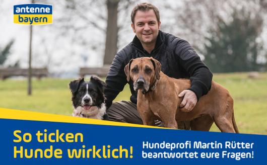 """""""So ticken Hunde wirklich!"""" (Bild: ©ANTENNE BAYERN)"""